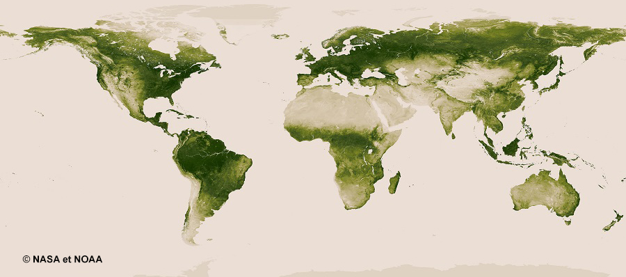 whole-earth-vegetation